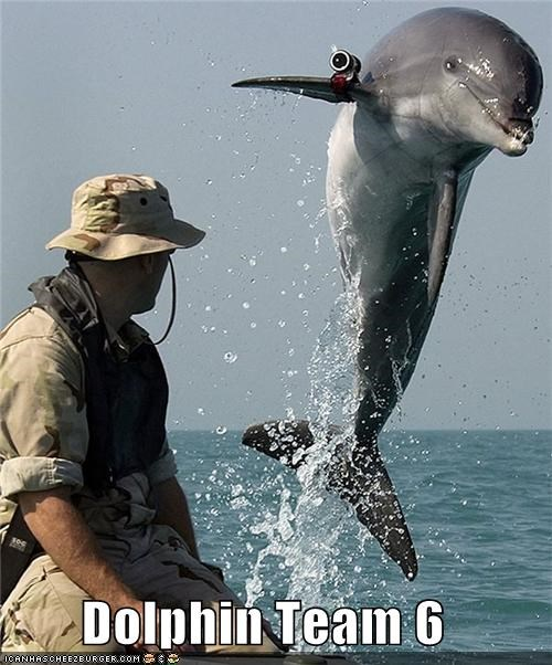 dolphins,navy seals,political pictures