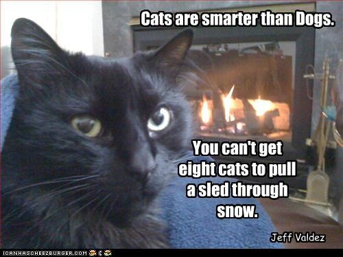 Cats are smarter than Dogs. You can't get eight cats to pull a sled through snow. Jeff Valdez