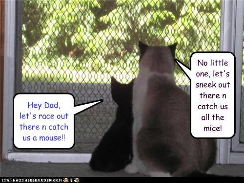 Hey Dad, let's race out there n catch us a mouse!! No little one, let's sneek out there n catch us all the mice!