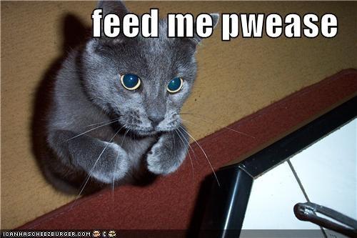 feed me pwease