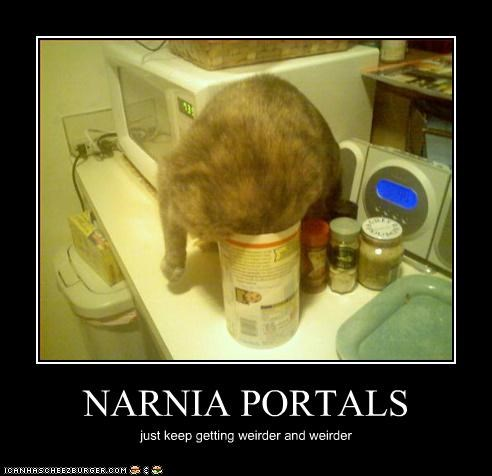 cs lewis,caption,captioned,cat,getting,narnia,Portal,portals,stuck,the chronicles of narnia,weird,weirder
