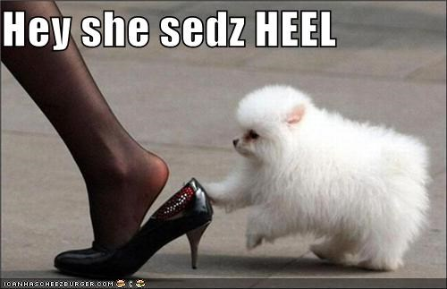 Command,double meaning,heel,high heels,literalism,pun,puppy,shoe,whatbreed