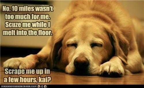 asleep exhausted few golden retriever hours request sarcasm sleeping sleepy tired wake up - 4828937472