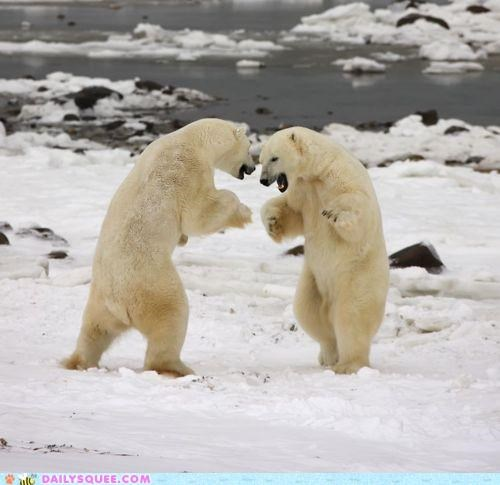 acting like animals ambiturner competing competition dance off dancing fingers crossed hoping polar bear polar bears reference zoolander - 4829046528