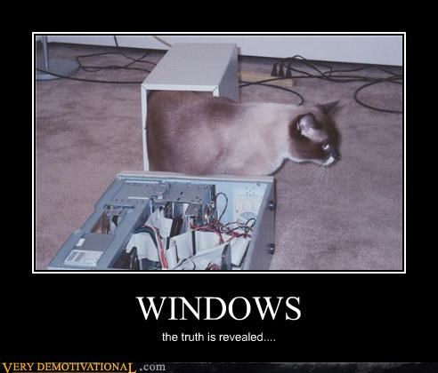 awesome cat hilarious truth windows - 4829128960