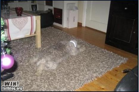 animals camo camouflage dogs ninja pets - 4829299968