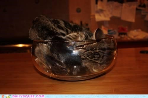 bead bed cat game glass herman hesse literalism pun similar sounding sleeping the glass bead game tray - 4829341440