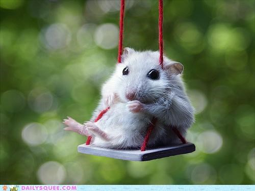 adorable,conspiracy,custom made,dwarf hamster,hamster,swing set,swinging,swings,tiny