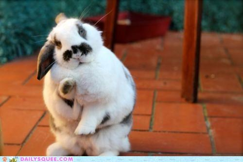 Bunday,bunny,cordial,happy bunday,host,hosting,Party,polite,rabbit,waving
