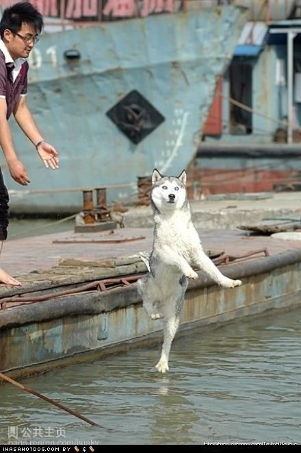 boat fall husky jump walk water - 4829770752