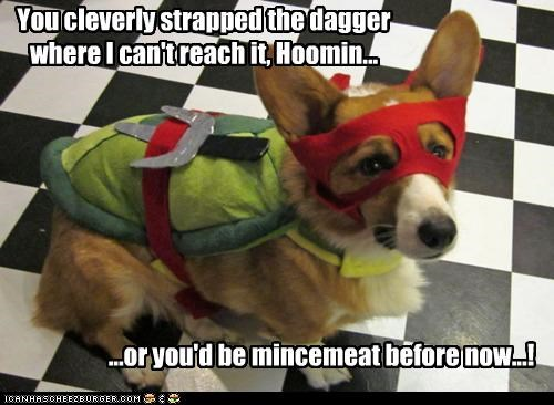 best of the week,corgi,costume,displeased,do not want,dressed up,good thinking,Hall of Fame,ninja,teenage mutant ninja turtle,threat,upset