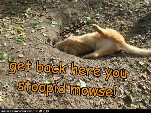 get back here you stoopid mowse!