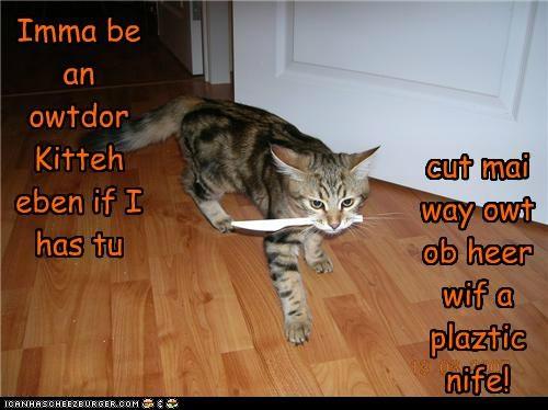 Imma be an owtdor Kitteh eben if I has tu cut mai way owt ob heer wif a plaztic nife!
