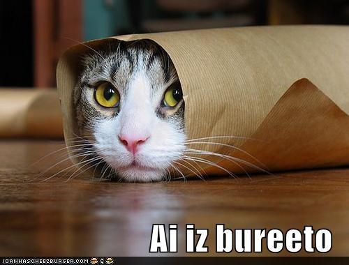 Cheezburger Image 4831537920