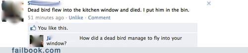 birds dead bird - 4831590912