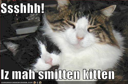 Ssshhh Iz Mah Smitten Kitten Cheezburger Funny Memes Funny