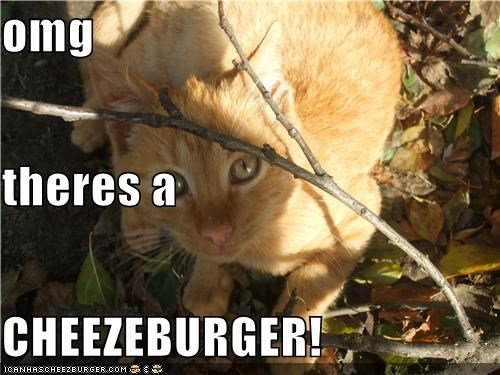 omg theres a  CHEEZEBURGER!