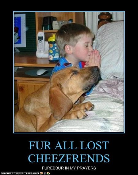 FUR ALL LOST CHEEZFRENDS