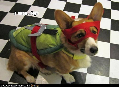 Cheezburger Image 4832325120