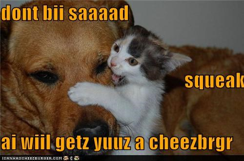 Cheezburger Image 4832538368