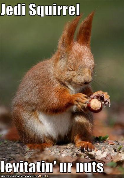 best of the week caption captioned Jedi levitating nut nuts squirrel star wars - 4832585728