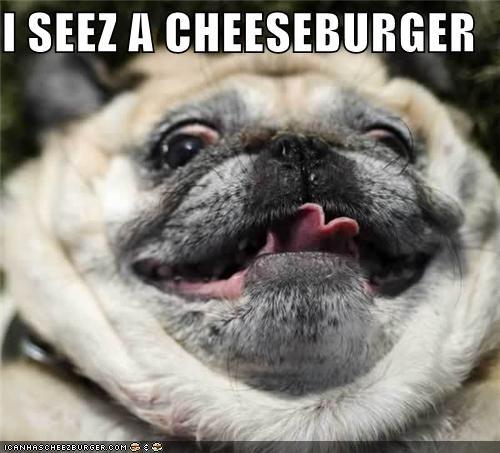 Cheezburger Image 4832846592