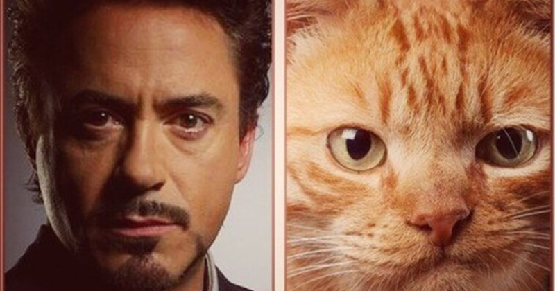gatos Avengers