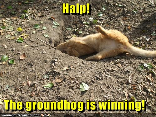 Halp!  The groundhog is winning!