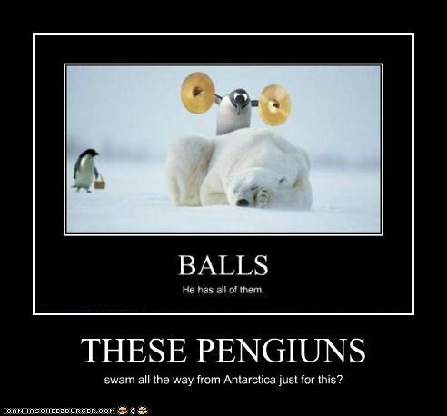 THESE PENGIUNS swam all the way from Antarctica just for this?