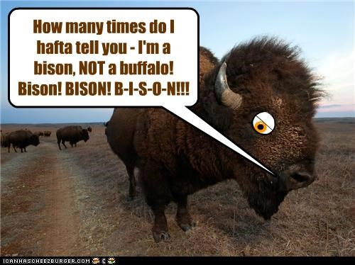 How many times do I hafta tell you - I'm a bison, NOT a buffalo! Bison! BISON! B-I-S-O-N!!!