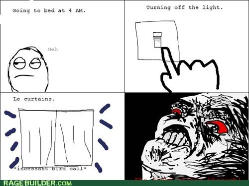 annoying,bird,morning,Rage Comics