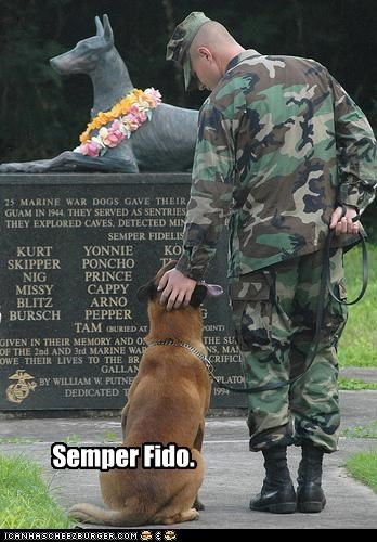 dogs marines political pictures