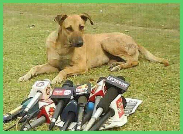 funny pics of animals being interviewed by the news