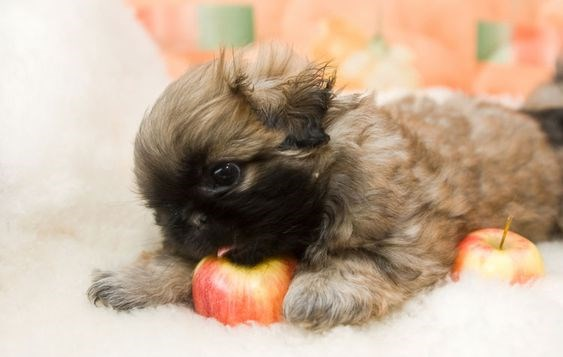adorable animals animals eating apples apples funny - 4836357