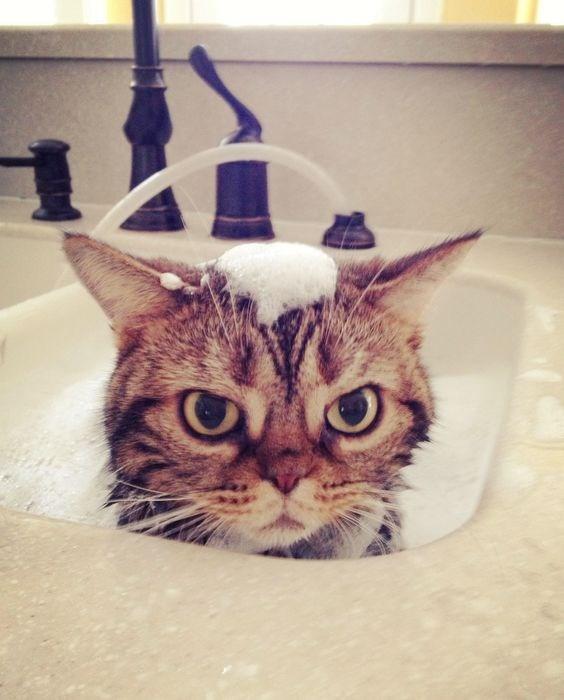 death stare Cats funny - 4836869