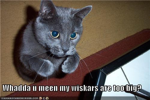 Whadda u meen my wiskars are too big?