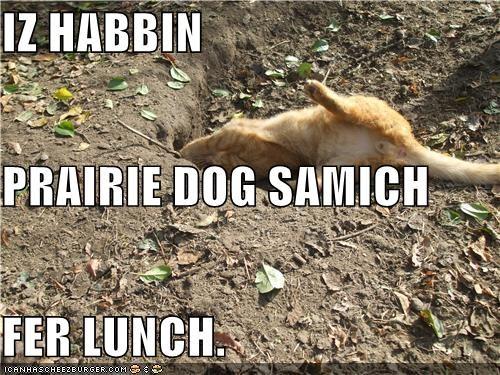 IZ HABBIN PRAIRIE DOG SAMICH FER LUNCH.