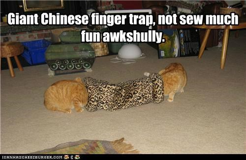 actually,caption,captioned,cat,Cats,chinese,chinese finger trap,finger,fun,giant,not so much,stuck,tabbies,tabby,trap