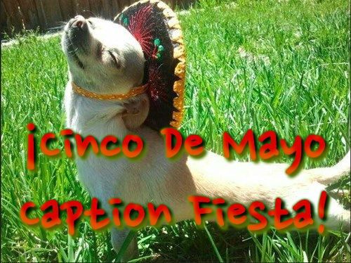 dogs list cinco de mayo community caption contest - 483845