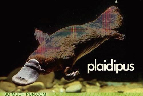 homophone,literalism,plaid,platypus,prefix