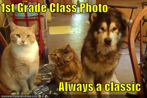1st always cat Cats class classic first grade husky Photo puppy