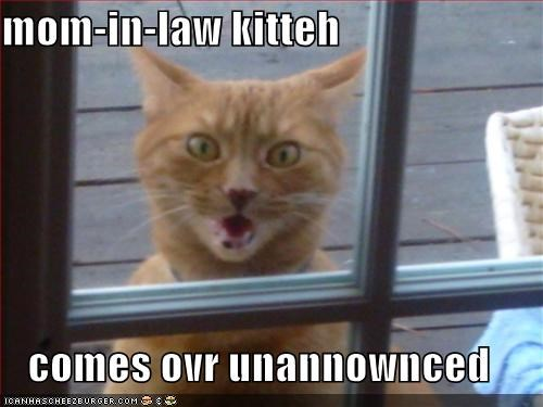 in laws lolcats meowing orange screaming shocked window
