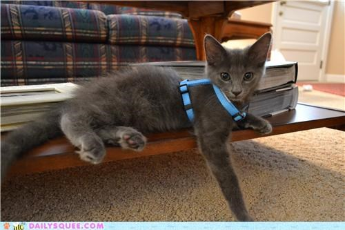 cat guitar harness kitten modeling name reader squees song title - 4839187968
