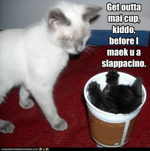 cappuccino caption captioned cat Cats cup kitten mine pun slap threat - 4839222272
