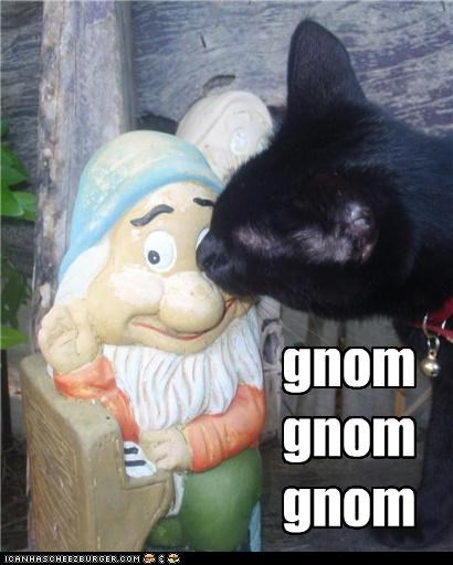caption captioned cat gnome nom nomming omnomnom pun statue - 4839717120