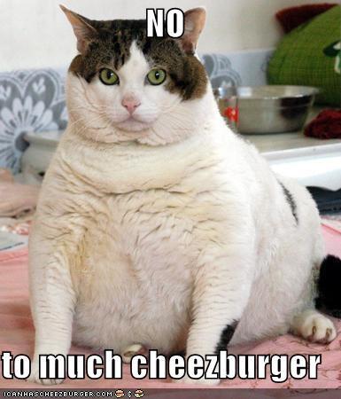 Cheezburger Image 4839735040