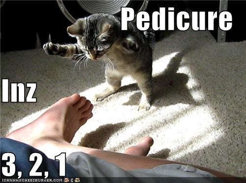1 2 3 caption captioned cat countdown feet pedicure - 4839745536