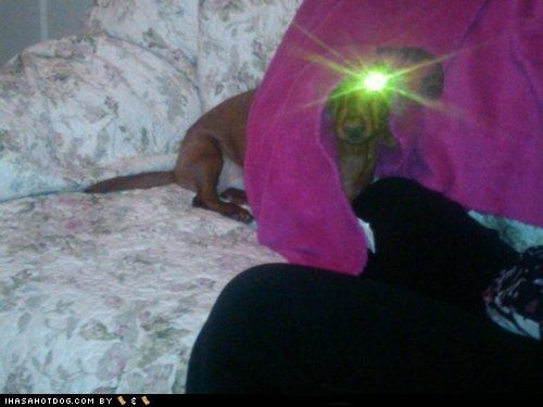 blanket,dachshund,eyes,flash,glowing,lasers