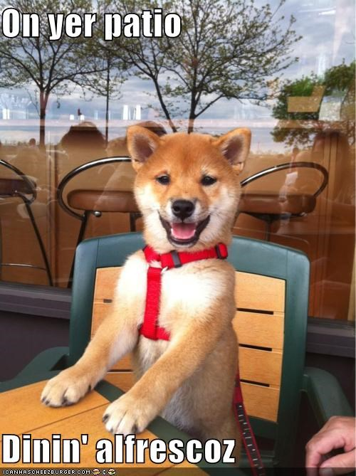 al fresco dining do want meme memedogs noms on patio shiba inu - 4839984384