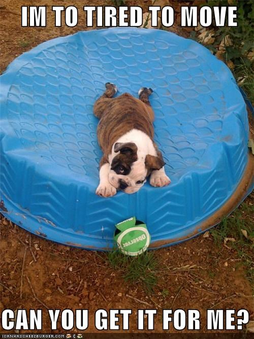 asking bulldog for get it me move please puppy question request tired too - 4840043008